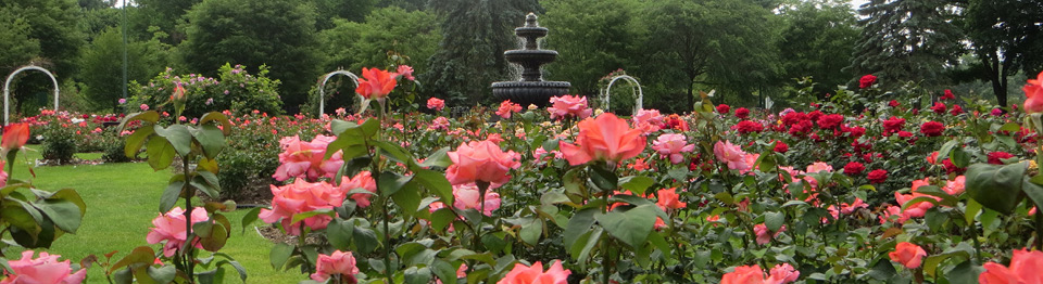 central park rose garden - Pictures Of Rose Gardens
