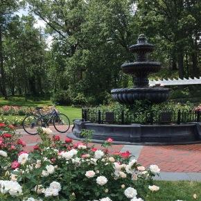 Garden_Do_Not_Use_Copyrighted_Bike