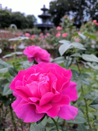 Pretty Lade Rose with Fountain
